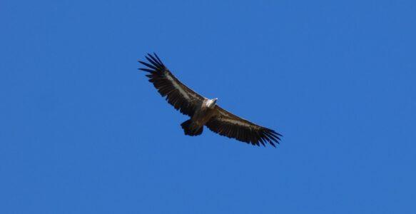Der Adler fliegt allein